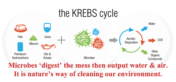 The KREBS Cycle for Microbial Cleaners